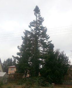 Gartenart bei der Fällung eines Baumes